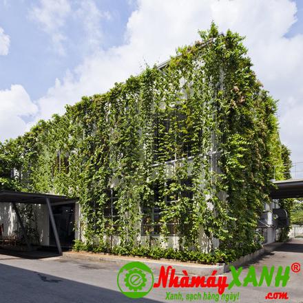 Chống nóng nhà máy bằng mảng tường cây xanh